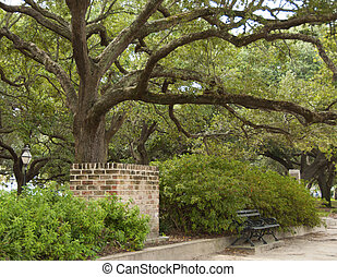 Live Oak Tree - A beautiful large Live Oak Tree in Battery...