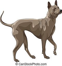 vector color sketch Thai Ridgeback Dog breed runs
