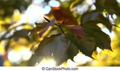 sun-kissed fall leaves