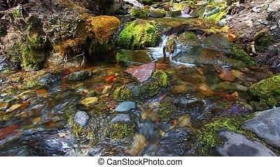 Glacier National Park Stream - Clear water flows through a...