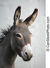 Donkey - a close encounter with an ass donkey