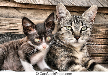 Two Cats - Two cats on a wooden background
