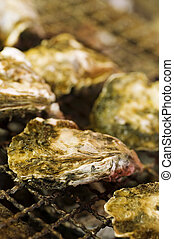 Grilled oyster during cooking, close-up shoot.