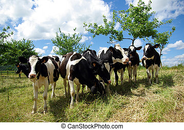 Group of cows in tilt-up view with a blue sky.