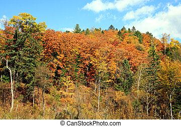 otoño, pinturas