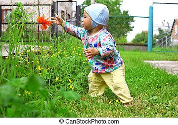 flor, naturaleza, bebé, exploración, tomado, rojo