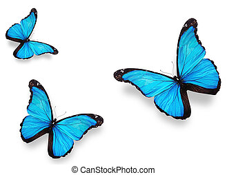 Three blue butterflies morpho, isolated on white background...