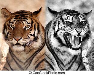 Color, expresión, blanco, negro, Contrarios