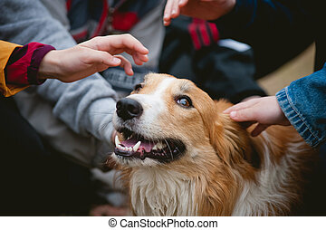children caress red border collie dog - children's hands...