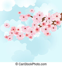 cherry blossoms on sky background