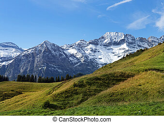 snowy peaks and green meadows in the Swiss Alps - beautiful...