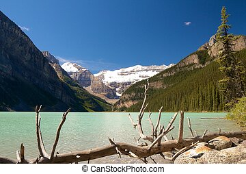 Dead tree at Lake Louise - Quiet scenery of Lake Louise...