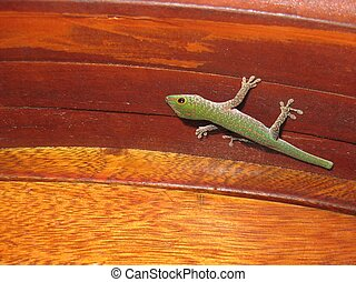 Cute green Seychelles gecko sitting on a wooden doorframe, waiting for its prey