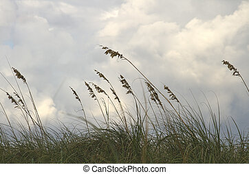 Sea oats on the beach swaying in the wind against beautiful...