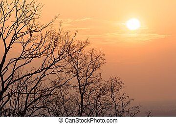 Warm evening sun above naked trees on a bright winter day in...