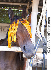 portrait of horse with orange horse-gear