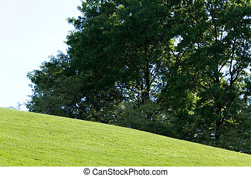 Green Lawn and tree