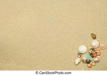 shells and sand background with room for text