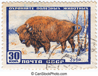 USSR - CIRCA 1961 : stamp printed in USSR show aurochs in...