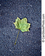 Maple leaf on tarmac road - Lonely, green yellow maple leaf...