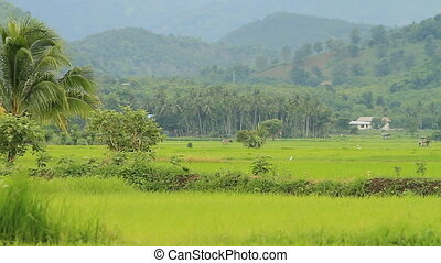Rice farm - Landscape and climate and rice farm in Thailand