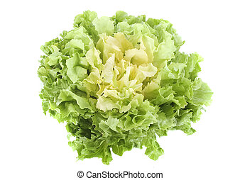 Escarole endive - salad Escarole endive in front of white...