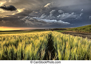 Storm Clouds Saskatchewan sunset over wheat fields