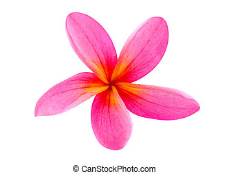Frangipani flower isolated on white , super close up
