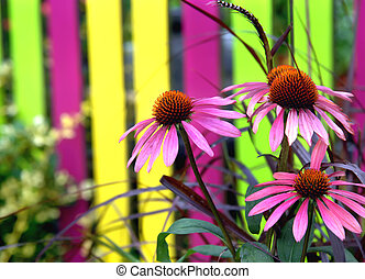 Brilliant Colored Flowers and Fence - Vivid pink cone...