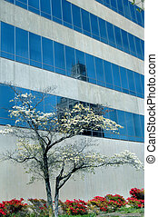 Blue Reflection - Windows on the Park Building reflects...