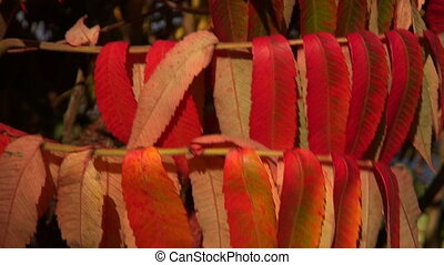 autumn colorful leaves background - autumn colorful leaves...