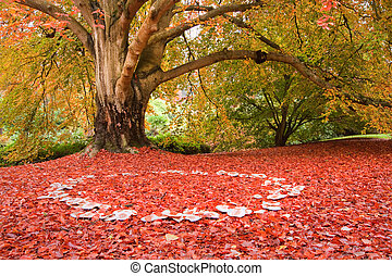 Beautiful Autumn Fall nature fairy ring mushrooms -...