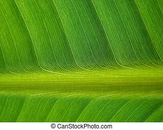 banana palm leaf green dark