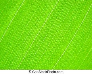 green leaf macro lines