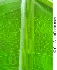 leaf macro lines - green wave lines