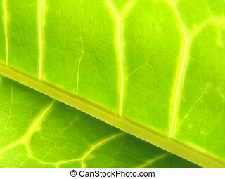 green leaf macro vains bright yellow - green leaf macro...