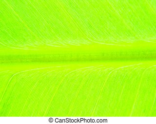 leaf bright green - leaf green bright banana leaf