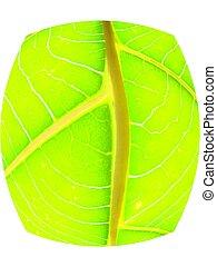 leaf macro lines - green leaf macro lines