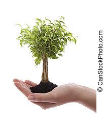 verde, árvore, segurando, mão