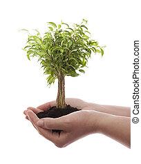 verde, árvore, segurando, mãos