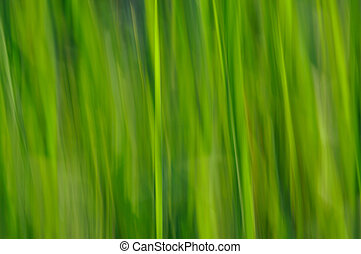 Spring impression - An abstract green background patterns...