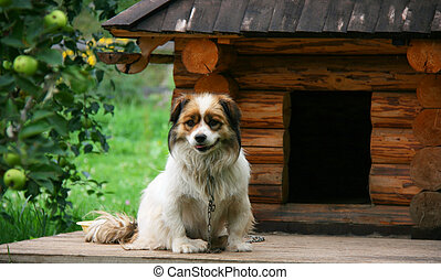 Dog near doghouse - Lonely dog watching out near his...
