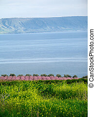 Sea of Galilee in Israel from Mount of Sermons