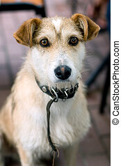 Stray dog - Abandoned mixed-breed dog begging for food on...