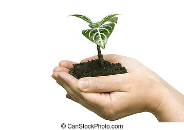 plant - Hands holding sapling in soil on white