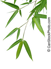 Bamboo Leaves - Bamboo leaves isolated over a white...
