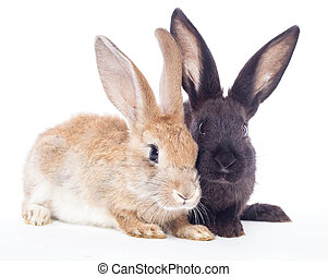 Two rabbit red black  on a white background