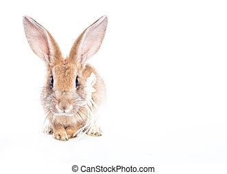 Red rabbit with bow  isolated on white background
