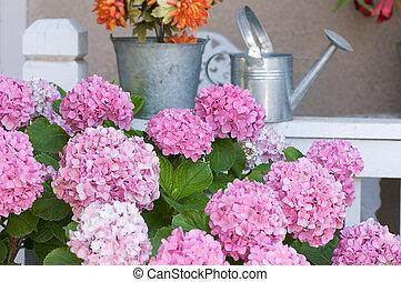 Beautiful Hydrangea Blossoms on Porch