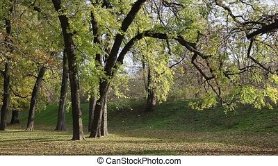 Autumn scene in a park - Fall, trees in a park with falling...